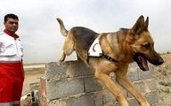 آموزش سگ های زنده یاب با گویش فارسی، سگ های موادیاب با زبان فرانسوی