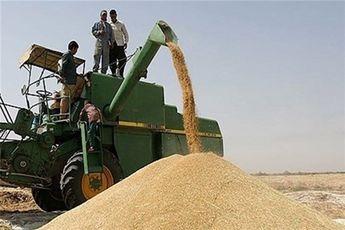 بیش از 200 هزار تن گندم از کشاورزان قزوین خریداری میشود