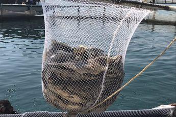 کاهش 25 درصدی تولید ماهی در چهارمحال و بختیاری
