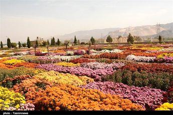 50 درصد گل و گیاه کشور از محلات صادر میشود