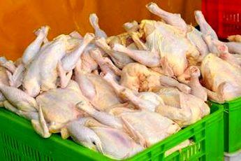 دستور دولت برای تثبیت قیمت مرغ تا تیر ۹۳