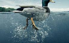 سندروم اردک