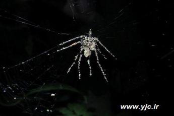 ۵ قدرت باورنکردنی عنکبوت ها + عکس