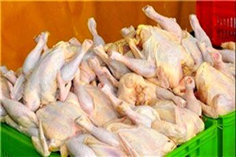 قیمت مرغ در زمستان افزایش نمییابد