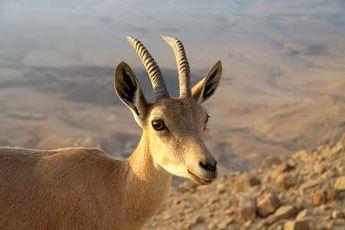 گونه های جانوری همدان 13 درصد افزایش یافت