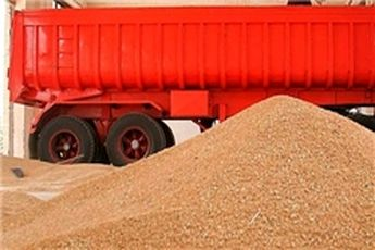 خرید یک میلیون و ۳۰ هزارتن گندم کشاورزان