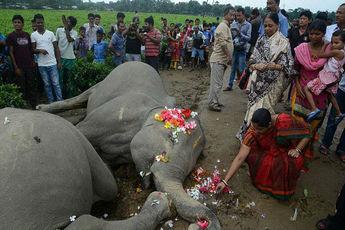 اتفاقاتی نادر که فقط در هند شاهد آنها هستیم