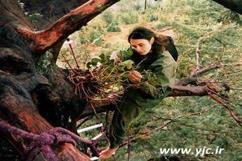 دو سال زندگی دختری روی درخت! + عکس