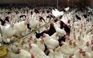 هشدار سازمان دامپزشکی برای پیشگیری از آنفلوانزای فوق حاد پرندگان
