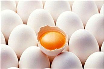 درج قیمت روی تخممرغ