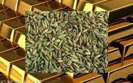 ورود طلای سبز به بازار مشتقه بورس کالای ایران