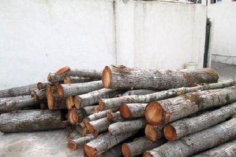 ۶ تُن چوب قاچاق در سیاهکل کشف و ضبط شد